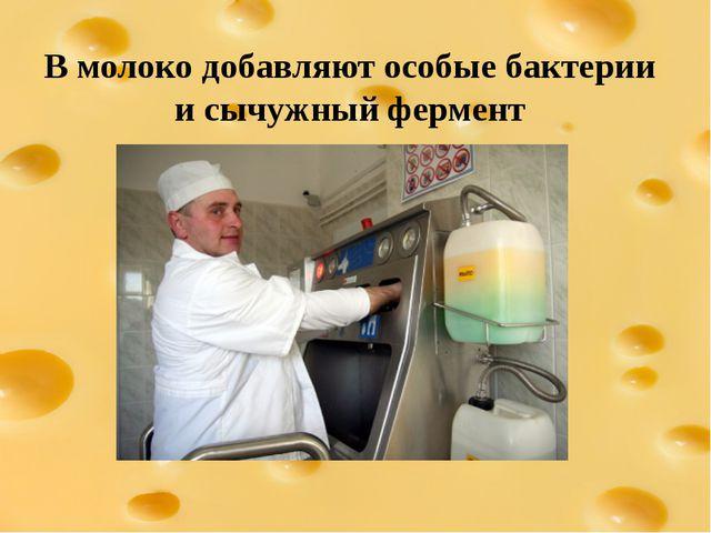 В молоко добавляют особые бактерии и сычужный фермент
