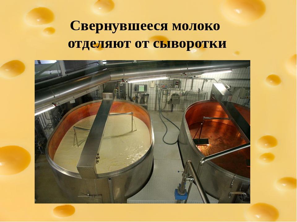 Свернувшееся молоко отделяют от сыворотки