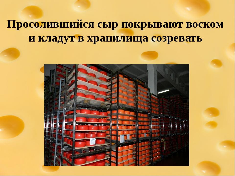 Просолившийся сыр покрывают воском и кладут в хранилища созревать
