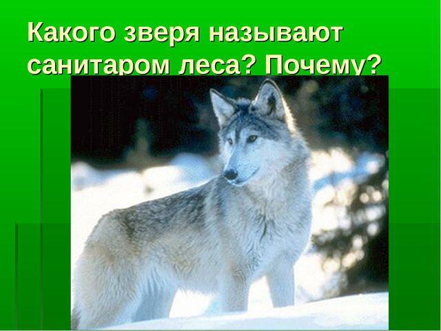 Какого зверя называют санитаром леса? Почему?