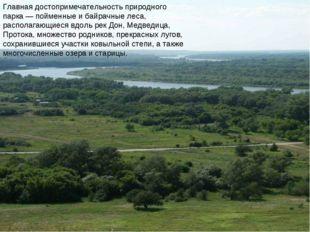 Главная достопримечательность природного парка— пойменные и байрачные леса,