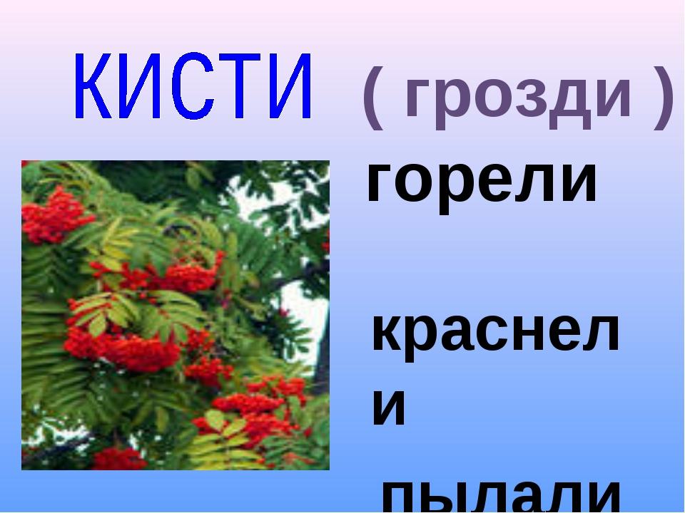 горели ( грозди ) краснели пылали алели