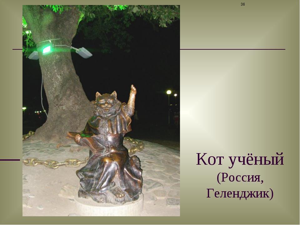 Кот учёный (Россия, Геленджик) *