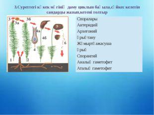 3.Суреттегі көкек мүгінің даму циклын бақыла,сәйкес келетін сандарды жазып,ке