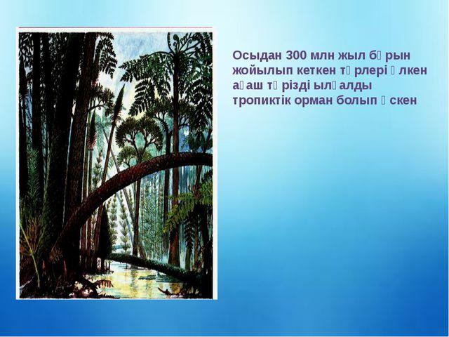 Осыдан 300 млн жыл бұрын жойылып кеткен түрлері үлкен ағаш тәрізді ылғалды тр...