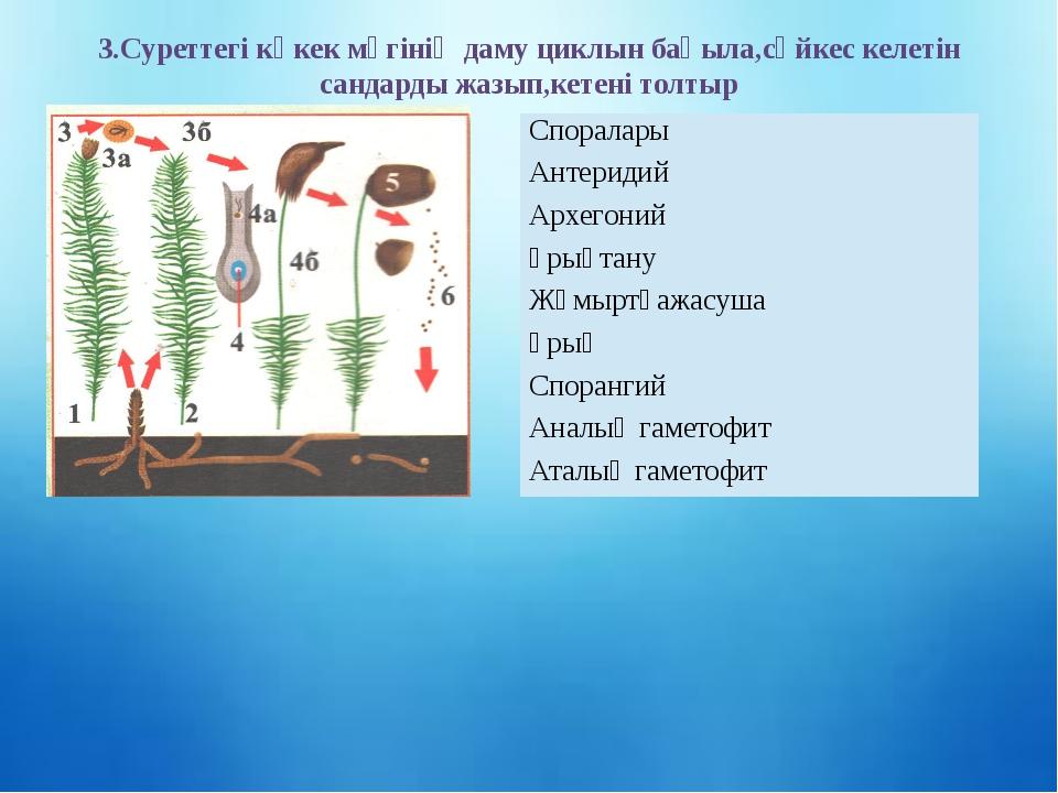 3.Суреттегі көкек мүгінің даму циклын бақыла,сәйкес келетін сандарды жазып,ке...