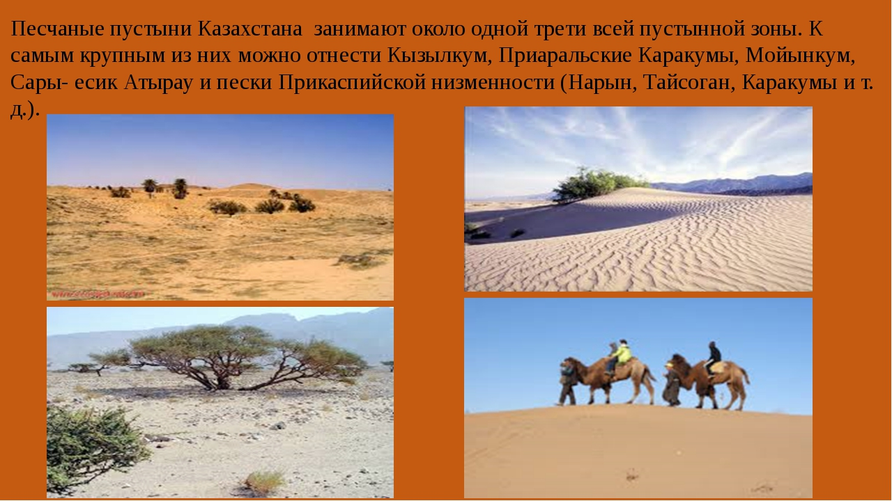 Песчаные пустыни Казахстана занимают около одной трети всей пустынной зоны....
