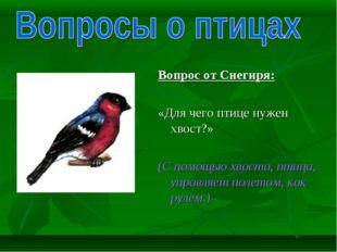 Вопрос от Снегиря: «Для чего птице нужен хвост?»  (С помощью хвоста, птица,