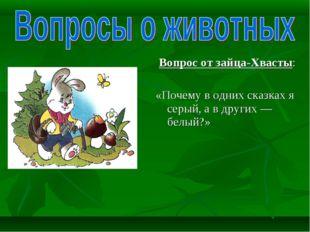 Вопрос от зайца-Хвасты: «Почему в одних сказках я серый, а в других — белый?»