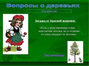 «Есть у родственницы елки, неколючие иголки, но в отличие от елки опадают те