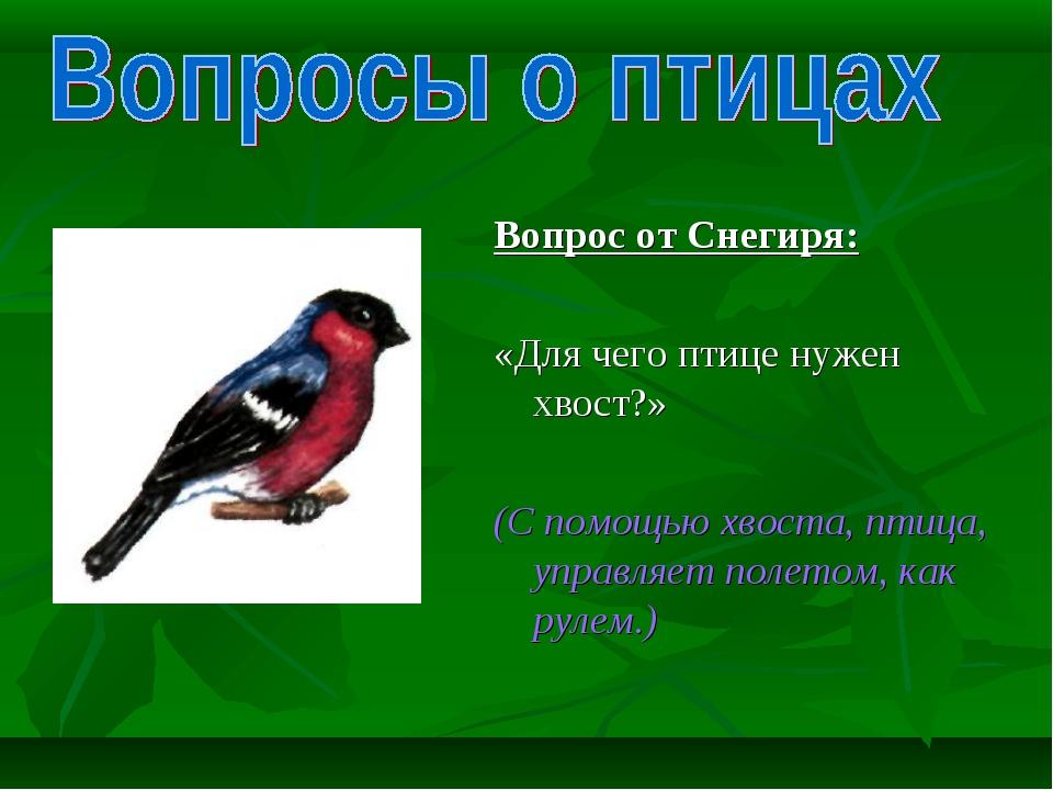 Вопрос от Снегиря: «Для чего птице нужен хвост?»  (С помощью хвоста, птица,...