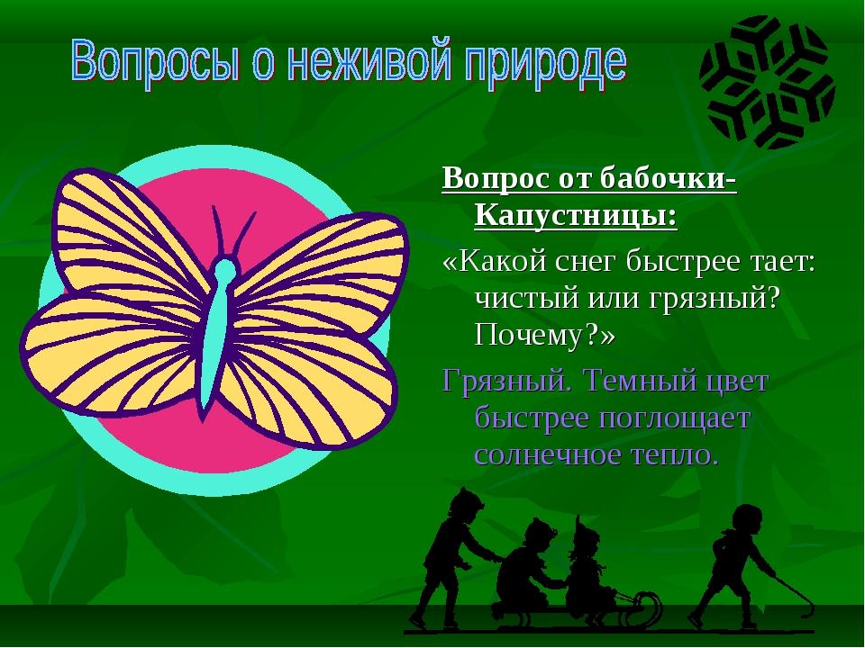 Вопрос от бабочки-Капустницы: «Какой снег быстрее тает: чистый или грязный?...