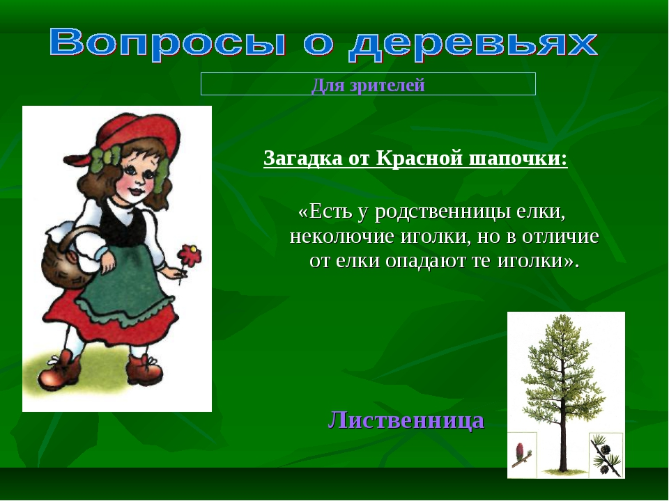 «Есть у родственницы елки, неколючие иголки, но в отличие от елки опадают те...