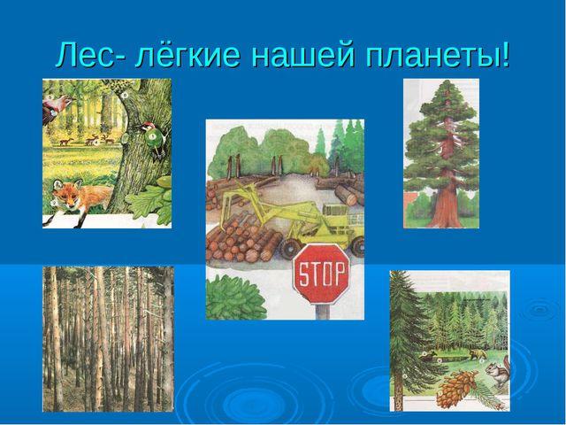 Лес- лёгкие нашей планеты!
