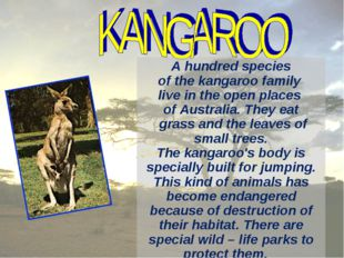 A hundred species of the kangaroo family live in the open places of Australia