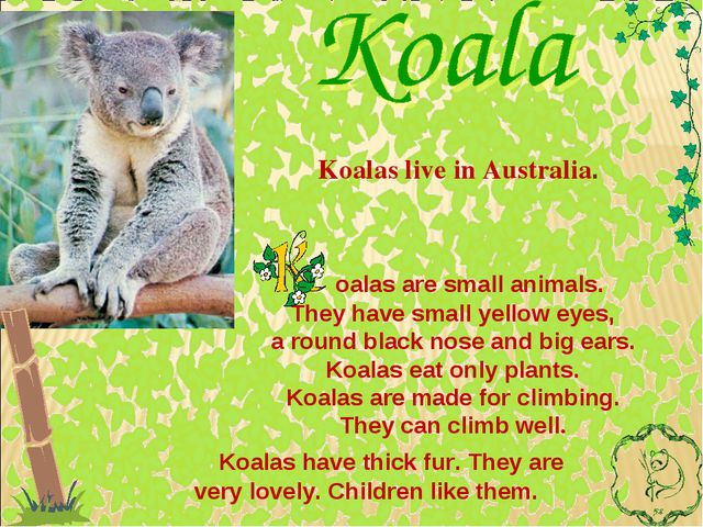 oalas are small animals. They have small yellow eyes, a round black nose and...