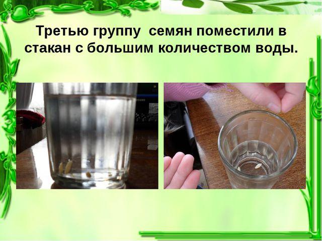 Третью группу семян поместили в стакан с большим количеством воды.