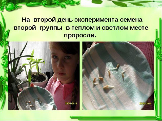 На второй день эксперимента семена второй группы в теплом и светлом месте пр...