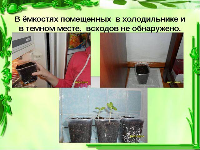 В ёмкостях помещенных в холодильнике и в темном месте, всходов не обнаружено.