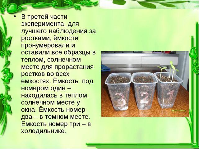 В третей части эксперимента, для лучшего наблюдения за ростками, ёмкости прон...