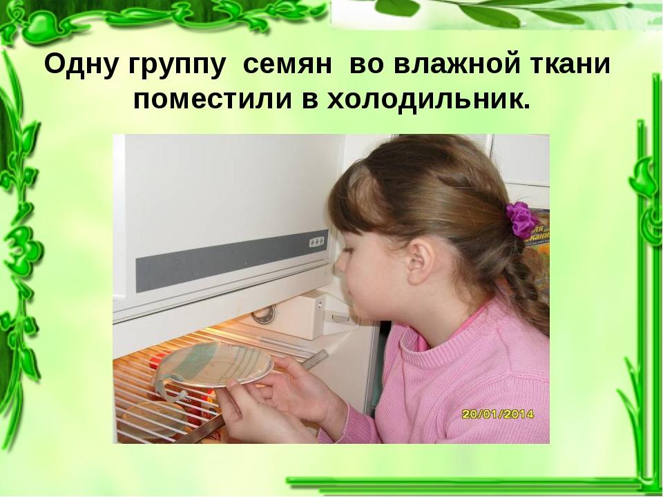 Одну группу семян во влажной ткани поместили в холодильник.