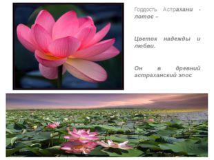 Гордость Астрахани - лотос – Цветок надежды и любви. Он в древний астраханск