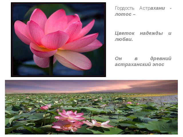 Гордость Астрахани - лотос – Цветок надежды и любви. Он в древний астраханск...