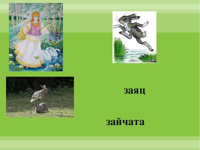 заяц зайчата