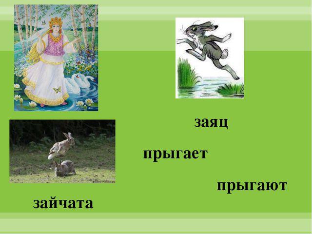 заяц зайчата прыгает прыгают