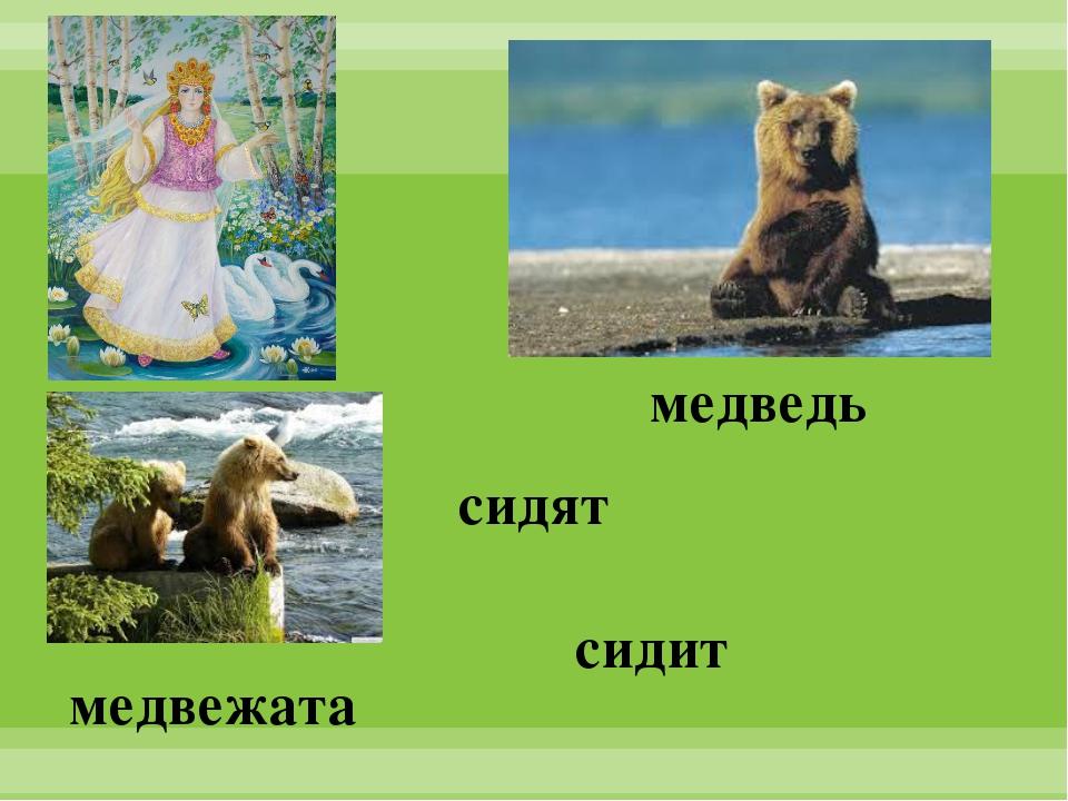 медведь медвежата сидят сидит