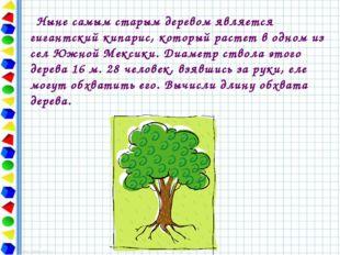Ныне самым старым деревом является гигантский кипарис, который растет в одно