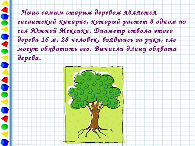 Ныне самым старым деревом является гигантский кипарис, который растет в одно...