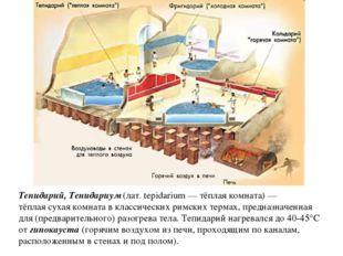 Тепидарий, Тепидариум (лат. tepidarium — тёплая комната) — тёплая сухая комна