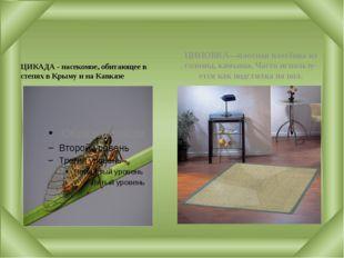 ЦИКАДА - насекомое, обитающее в степях в Крыму и на Кавказе ЦИНОВКА—плотная