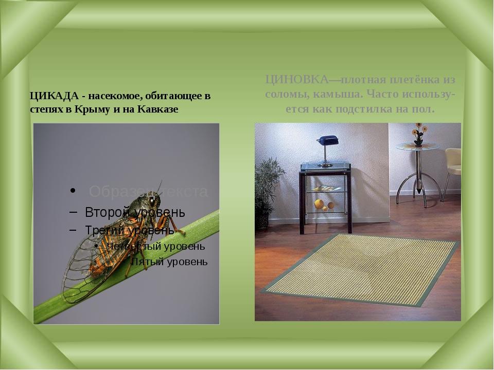 ЦИКАДА - насекомое, обитающее в степях в Крыму и на Кавказе ЦИНОВКА—плотная...