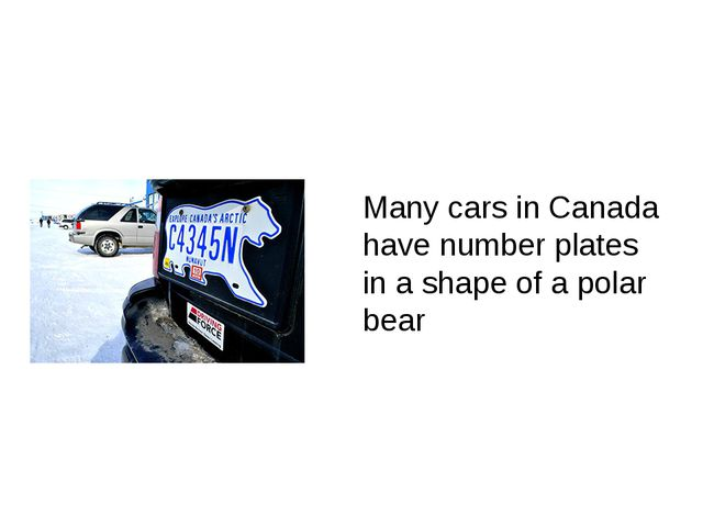 Many cars in Canada have number plates in a shape of a polar bear