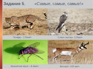 Задание 5. «Самые, самые, самые!» Гепард – 115км/ч Сокол-сапсан- 110км/ч Комн