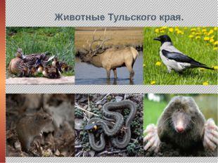 Животные Тульского края.