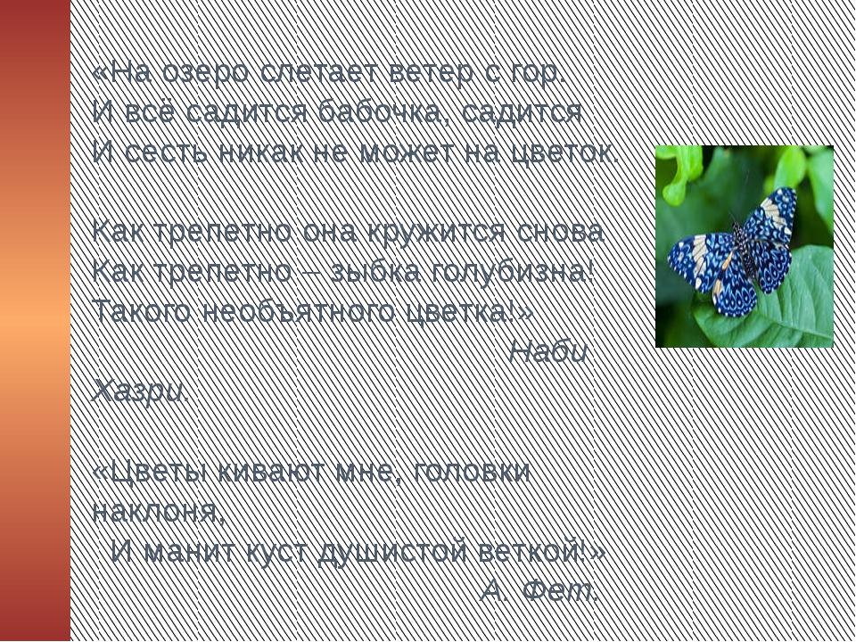 «На озеро слетает ветер с гор. И всё садится бабочка, садится И сесть никак н...