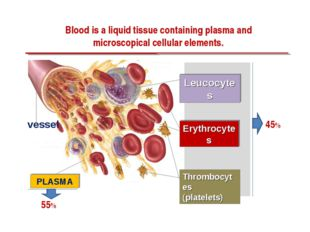 Blood is a liquid tissue containing plasma and microscopical cellular element