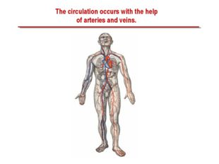The circulation occurs with the help of arteries and veins.