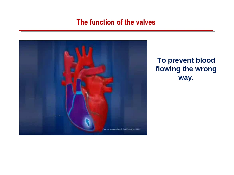 To prevent blood flowing the wrong way. The function of the valves
