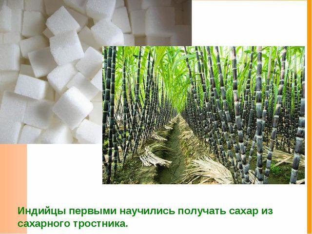 Индийцы первыми научились получать сахар из сахарного тростника.