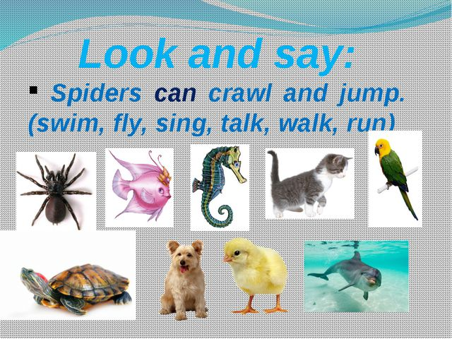 Look and say: Spiders can crawl and jump. (swim, fly, sing, talk, walk, run)