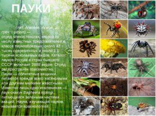 ПАУКИ Пауки́(лат.Araneae,Aranei,др.-греч.ἀράχνη)— отрядчленистоногих,