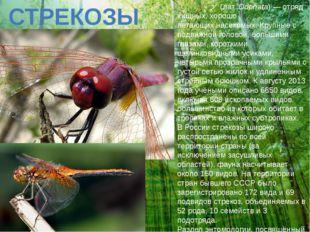 СТРЕКОЗЫ Стреко́зы(лат.Odonata)— отряд хищных, хорошо летающихнасекомых.
