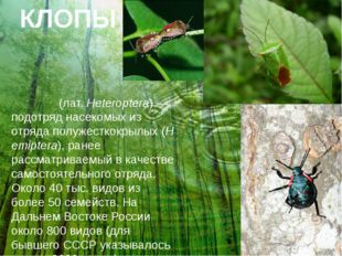 КЛОПЫ Клопы́(лат.Heteroptera)— подотряднасекомыхиз отрядаполужесткокрыл