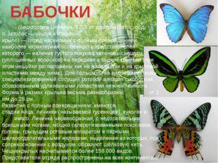 БАБОЧКИ Чешуекры́лые, илиба́бочки,мотыльки́, мо́ли(LepidópteraLinnaeus,1