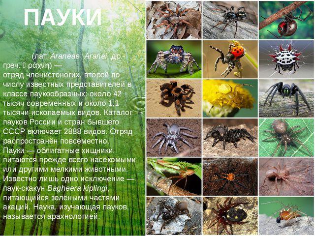 ПАУКИ Пауки́(лат.Araneae,Aranei,др.-греч.ἀράχνη)— отрядчленистоногих,...