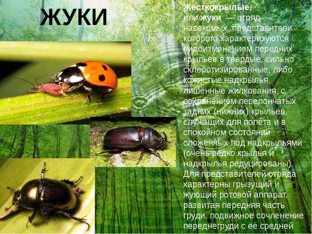 ЖУКИ Жесткокрылые, илижуки—отряд насекомых, представители которого характ...